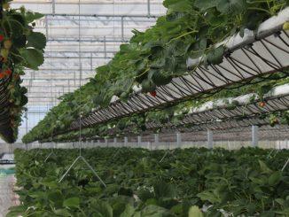 Sundrops Farms, la revolución de la agricultura sostenible